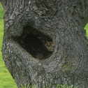 Unknown spotting