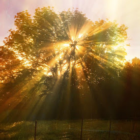 Sunbeam by Mandy Cole - Nature Up Close Trees & Bushes (  )