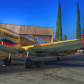 Curtis P-40 Warhawk by Tom Anderson - Transportation Airplanes ( california, chino, planes of fame, curtis p-40 warhawk )