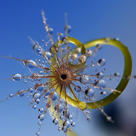 by Saefull Regina - Nature Up Close Leaves & Grasses (  )