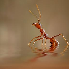 BERTAHAN DI TENGGAH BANJIR by Yan Hidayat  - Animals Insects & Spiders