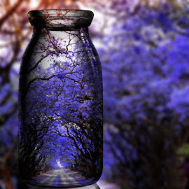 Purple Rain by Lana Nolte - Artistic Objects Glass ( jacaranda, purple, glass, blossoms, purple flower )