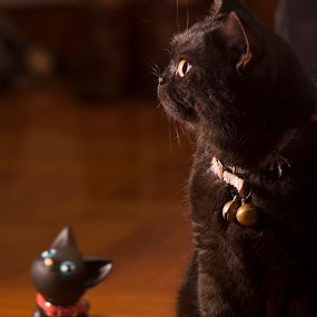 We are the same~ by Ryan Li - Animals - Cats Portraits ( looking, sit, look, cat, kitten, toy, funny, fun, interesting, black, animal )