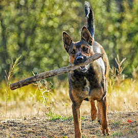 Fetch! by Twin Wranglers Baker - Animals - Dogs Playing (  )