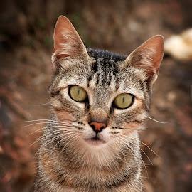 curiosity killed the cat by Jose Luis Mendez Fernandez - Animals - Cats Portraits ( cat, pet, kitty, animal )
