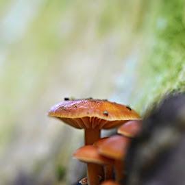 Rostou stále by Maru Vykydalová - Nature Up Close Mushrooms & Fungi ( scenic )