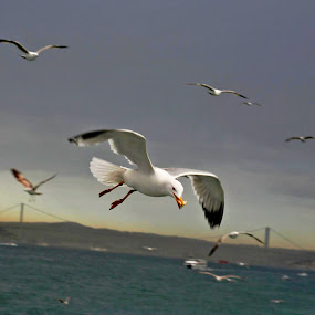 A shot taken in Istanbul, Turkey by Ferhan Mazllami - Animals Birds ( pwcmovinganimals )