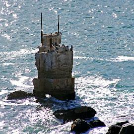Abandoned Lighthouse Cape of Good Hope by Ingrid Anderson-Riley - Buildings & Architecture Decaying & Abandoned ( secret, fantasy, secret garden, secret path, secret door,  )