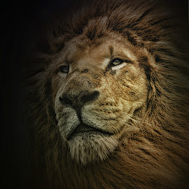 by Kelly Murdoch - Animals Lions, Tigers & Big Cats