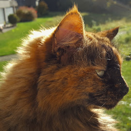 cat enjoying by Nele Hölzer - Instagram & Mobile Android ( home, cat, autumn, happy, sun )