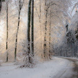 Gentle morning light by Joško Šimic - Landscapes Forests ( otočec, slovenia, golf, forest, struga )