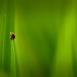 Reach the Top 2nd Edition by R. Deta Shandytia - Novices Only Macro ( macro, nature, green, ladybugs, pentax, bug, bokeh, inspired )