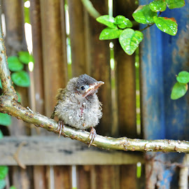 hanging out by Shreya Bansal - Novices Only Wildlife ( bird, outdoor garden, green, plants, learning, baby,  )