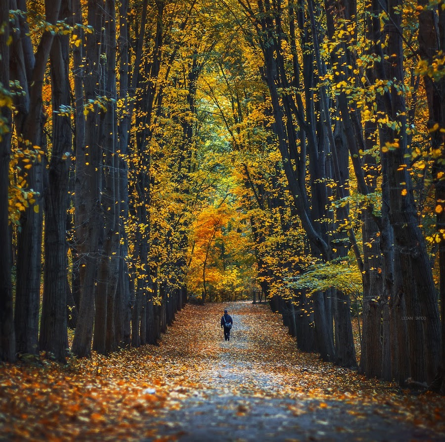 Autumn in the park by Lilian Iatco - Landscapes Forests ( canon, walking, colors, day, alone,  )