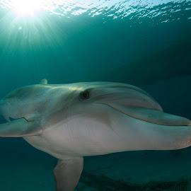 by Nir Praizner - Animals Sea Creatures