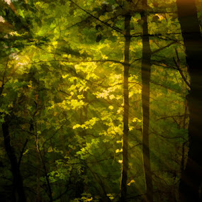 Forest of Dreams by Val Ewing - Digital Art Places ( greens, dreams, forest of dreams, colors, rays of light, forest )