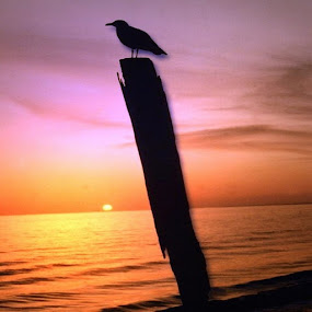 Sunset & Sky 002N by Anthony Power - Animals Birds