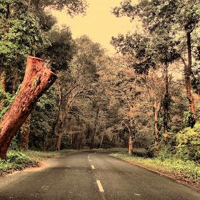 Lataguri by Jhilam Deb - City,  Street & Park  Street Scenes ( gorumara national park, lataguri, forest, streets, road,  )