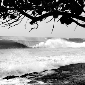 Waterscape,Ocean,Puerto Rico,Atlantic Ocean,magalito's,Beach,Surf,Black and White,Tree's,Nature,Landscape,Rocks,Reef,Surf,Peace,Relaxing,Tranquility by Chris Wilson - Landscapes Waterscapes ( water, puerto rico, atlantic ocean, reef, surfing, black and white, waves, ocean, beach, surf, rocks )