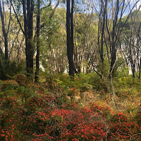 The Orange Flowers by Charline Ratcliff - Landscapes Forests ( forests, nature, australia, flowers, western australia )
