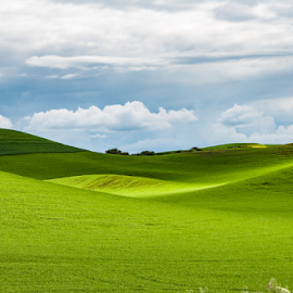 The Palouse by Brian Allison - Landscapes Prairies, Meadows & Fields ( idaho, hills, palouse, green, landscape, farming, fields,  )