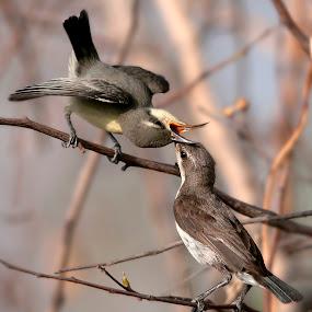 Mommas brought breakfast by Masood Hussain - Animals Birds
