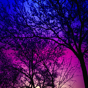 Rainbow Forest by Rachel Santellano - Instagram & Mobile Android ( graduated, purple, silhouette, trees )