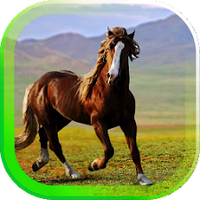 Horses Gallery live wallpaper
