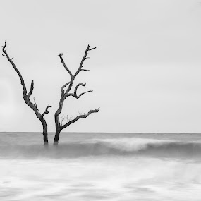 Lonely Tree In The Boneyard by Bonnie Davidson - Black & White Landscapes ( water, atlantic ocean, waves, black & white, white, gray, limbs, boneyard, south carolina, edisto beach, sky, tree, sunrise, dead, branches, black,  )