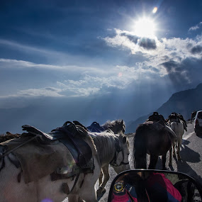 Horses on hills by DrArindam Ghosh - Animals Horses ( hills, animals, blue sky, horses, twilight, sunrays, dukh, horses on hills )