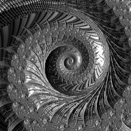 Etched Spiral by Amanda Moore - Illustration Abstract & Patterns ( spirals, digital art, fractal art, mandelbrot, spiral, fractal, digital, fractals )