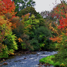 Early Autumn On Boyden Creek by Howard Sharper - Landscapes Waterscapes ( autumn leaves, waterscape, autumn, creek, autumn colors, landscape )