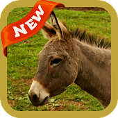 App Donkey Wallpaper apk for kindle fire