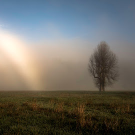 by Larry Rogers - Landscapes Prairies, Meadows & Fields