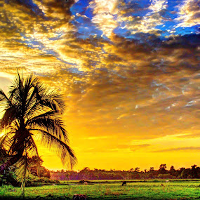 A moment with God by Raj Mushahary - Landscapes Cloud Formations ( assam, grazing, coconut, blue, green, sunset, white, cloud, india, beauty, yellow, landscape )
