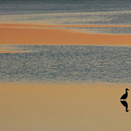 Tampa Bay Reflections by Deborah Ryan - Landscapes Beaches ( water, sunset, florida, ocean )
