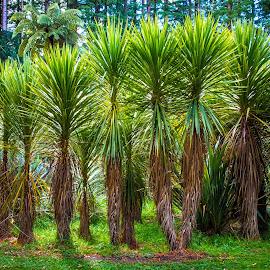 The 12 Apostles by Richard Duerksen - Nature Up Close Trees & Bushes ( lake rotorura, hanauma, trees, ferns, spring, hanauma spring )