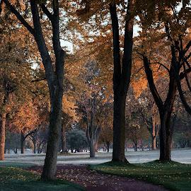 Frosty Morning Stroll by Jon Kinney - Landscapes Forests