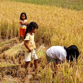 happy days by Hartono Wijaya  - Babies & Children Children Candids ( toraja, paddy field, nature, indonesia, children, travel photography,  )