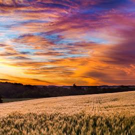 Morning Wheat by David Kreutzer - Landscapes Sunsets & Sunrises ( farm, field, wheat, sunset, summer )
