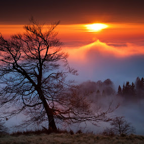November sunset by Tamas Valentin - Landscapes Cloud Formations ( tree, nature, sunset, cloud, landscape, fogg )