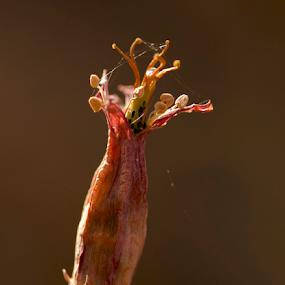 Job Done by Lian van den Heever - Nature Up Close Other plants ( seedpod, southern, africa, flower, plakkie )