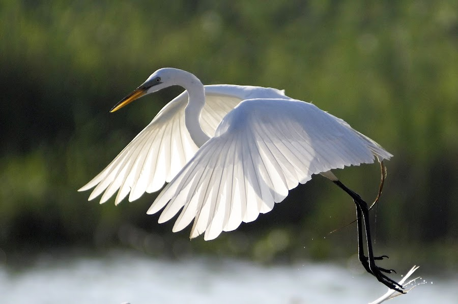 Xray of Heron by Alfredo Garciaferro Macchia - Animals Birds