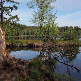 Wild nature by Alena Ajaja Koutná - Landscapes Prairies, Meadows & Fields