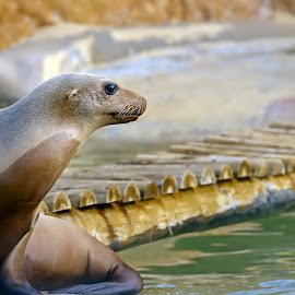 by Kishu Keshu - Animals Sea Creatures