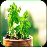 Cura pelas Plantas Icon