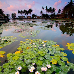 Candidasa Lotus Pond, Bali by Tan  Kian Yong - Landscapes Travel ( bali, lotus, village, candidasa, indonesia, travel, rural )
