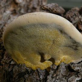 by Kris Pate - Nature Up Close Mushrooms & Fungi