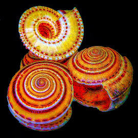 Abstract Shells by Dave Walters - Abstract Patterns ( macro., sea shells, abstract, lumix fz2500, colors )