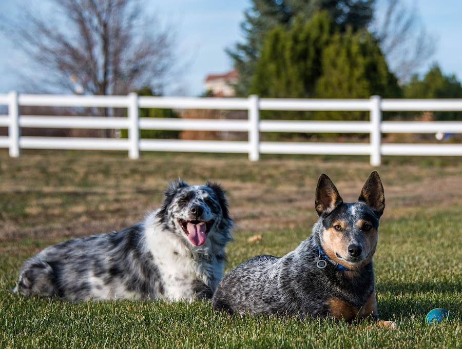 by Steve Wieseler - Animals - Dogs Portraits